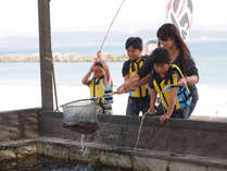 高級魚釣堀は大人も子供も夢中で楽しめる!海を見ながら鳴門鯛を釣ろう!