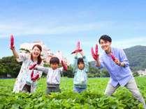 大人から子供まで楽しめる鳴門金時芋掘り体験!ホテル目の前の畑だから楽々♪いっぱい収穫できたよ☆
