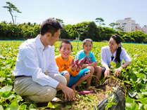 大人気の鳴門金時芋堀体験は今年も開催中♪砂地でサクサク楽に掘れます。掘ったお芋はお土産に!