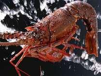 県南の海で育ったピッチピチの伊勢海老を、レストラン別にアレンジ。どのレストランで味わうか迷うかも☆