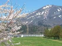 """猪苗代リゾートの桜の見頃は4月下旬~GW♪磐梯山""""キツネの雪形""""と町営牧場の桜並木がお出迎えします。"""