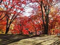 【車で10分】猪苗代町 土津神社のもみじの紅葉