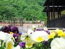 【希みの湯】花の露天風呂♪