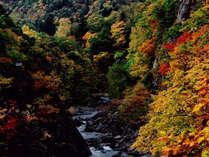 二見吊橋からの紅葉。お天気の時は、紅葉がとっても綺麗です