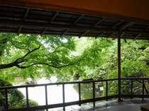 【庭園】渡り廊下から緑鮮やかなもみじをご覧頂けます