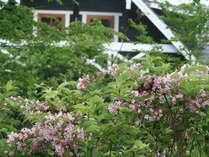 「たにうつぎ」地方名「田植え花」ホトトギスと共に初夏の始まりです。5月初-6月初