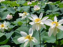 花はす温泉 そまやま