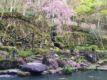 宙SORAの人気しだれ桜は4月上旬が見頃です。ロビー正面が特等席です。(イメージ)