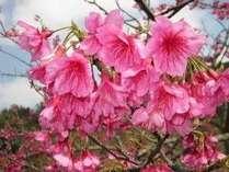旧正月特別企画:春節促銷活動。3連泊以上で割引あり。温暖な沖縄で一足早い春満喫プラン