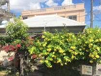 沖縄古民家の瓦屋根外観。緑の草花に囲まれて趣あります。
