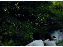 初夏を彩るあじさいと、幻想的な光舞う夏の風物詩ホタルを見に行こう!
