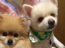 【ワンちゃんと宿泊OK】1泊2食付~愛犬と癒しと寛ぎの旅~