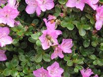 【ツツジのお花見弁当】3000坪の日本庭園で色鮮やかなツツジとお花見弁当をどうぞ◆【夕部屋食】
