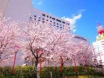 ホテルオークラ新潟と河川敷に咲く満開の桜!