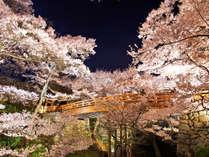 *【高遠城址公園】さくら名所100選にも選ばれ、1500本の桜が咲き乱れます。