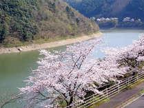 【春の休日】お花見にも♪♪散策&ドライブde春満喫