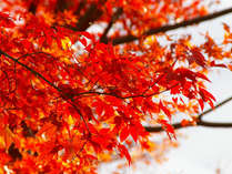 <秋の休日>伊予の小京都・大洲楽しむで鮮やかな紅葉!愛媛を満喫