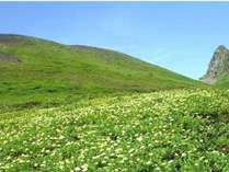 秋田駒ケ岳へトレッキングに出かけよう♪