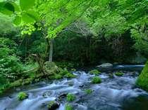 <滝の湯川>季節毎風景を変える渓谷と渓流、絵葉書のような美しさ