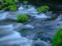 <滝の湯川>親湯の目の前を流れる渓流。川の音に癒される