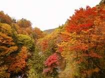 <親湯の紅葉>10月下旬から見られる秋の景色、広葉樹がメインなのが特徴