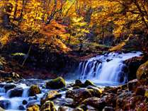 蓼科温泉ホテル親湯周辺の紅葉は美しく散策にも人気です