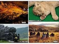 天然記念物を含めた観光場所があるので、観光にオススメです!