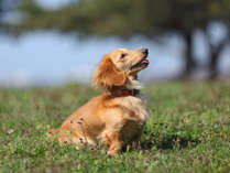 愛犬と一緒に自然を満喫