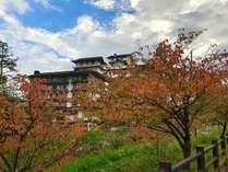 周囲の桜の木の葉が色づいてとても綺麗です。お散歩などにオススメです!