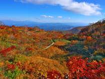 【秋】黄色に赤が入るのがいい!五竜のここの紅葉を見るなら10月10日頃。小遠見10月頭、園内10月中旬