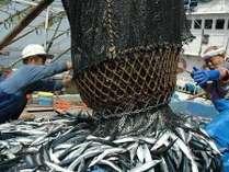 秋の収穫祭プラン 水揚げしたばかりの秋刀魚を満喫