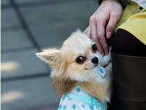 ワンちゃんも一緒♪小型犬2匹までご宿泊可能です。