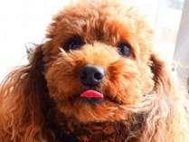 小型犬のわんちゃんOK!