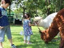 八幡平高原で自然を楽しもう「サラダファーム」入場チケット付きプラン【夕食は女将膳】