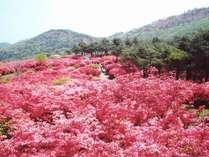 国内最大級のツツジの名所!徳仙丈山でウォーキングプラン♪【お茶付】