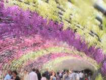 藤のトンネル