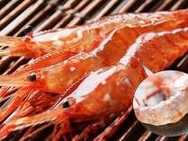 【踊る!活海老】前浜春の訪れ・大漁活牡丹海老プラン