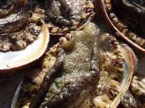 地元で獲れたばかりの新鮮アワビ、お刺身、踊り焼き、バター焼き、最高です(特注可能)
