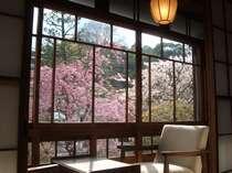 【本館客室】広縁の椅子に腰掛けて春の花を愛でる