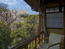【本館客室】客室からの桜に春を満喫