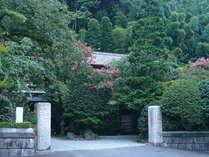 【門より(夏)】樹齢三百余年の百日紅が青空に映える