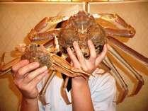 鳥取県産の『本松葉蟹』を使用致しております。