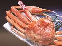 山陰冬の高級食材『松葉蟹』