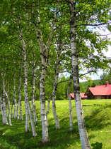 じゃらん限定早期予約で割引夏休みは「安暖庭」食・温泉・自然満喫無料プラン