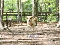 森の木々に覆われて暑い日でも快適に遊べる森のドッグラン