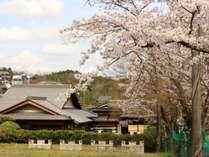 外観_春(桜)当館目の前が桜並木!広々敷地内でお花見も出来ますよ!