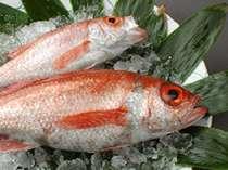 【のど黒】白身のトロと呼ばれる高級魚です。