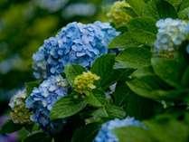 【無料朝食付】月別割引Stayプラン/ 水無月  ~6月の激安プラン~「直前プラン」