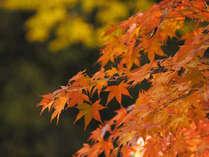 【紅葉のススメ♪】秋旅の拠点に!高野山や吉野山、真田幸村の九度山にも♪