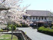 ヒラヒラ舞う桜を見ながらお花見はいかがですか?